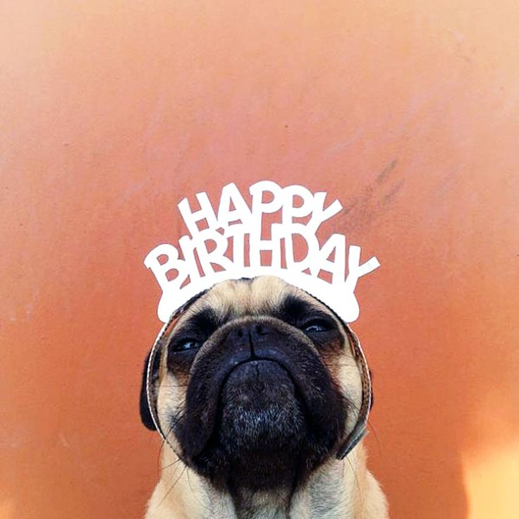 Happy Birthday By Norm The Pug